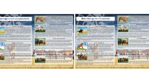 Стенд животноводство в Казахстане, на казахском и русском [CDR]