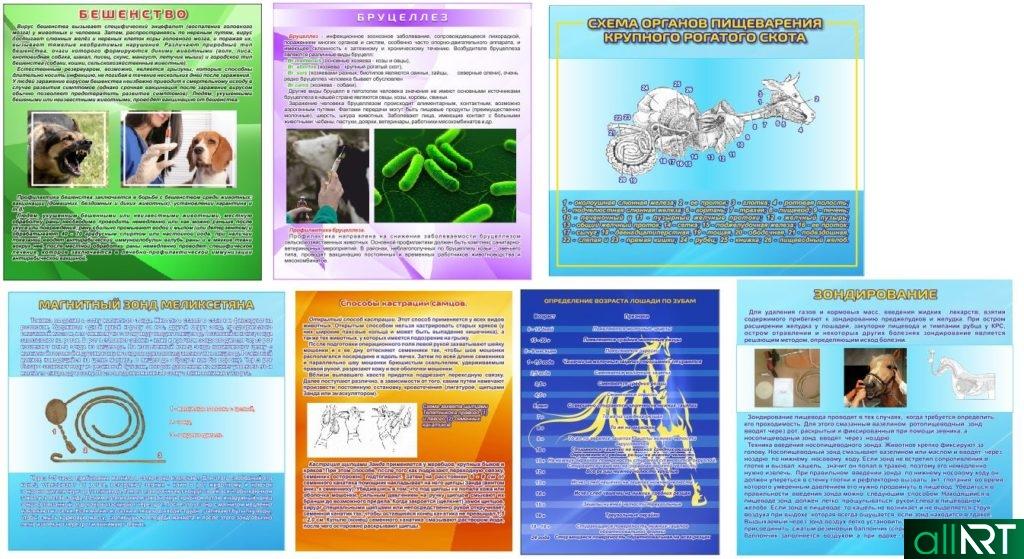 Ветеринарные стенды, Бешенство, Бруцеллез, Возраст лошади по зубам, Зондирование в векторе [CDR]