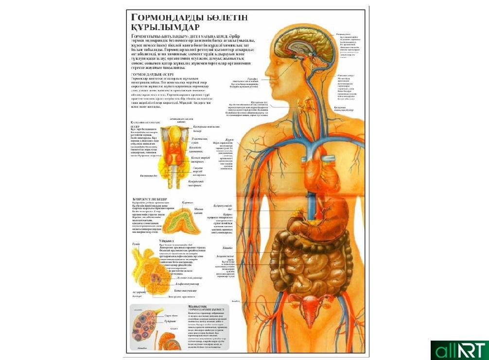 Медицинский плакат , человек в разрезе, вектор на казахском [CDR]