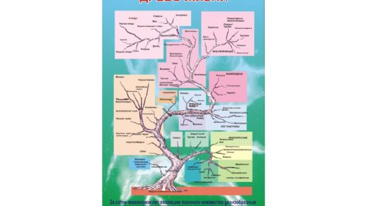 Стенд по биологии древо жизни в векторе [CDR]