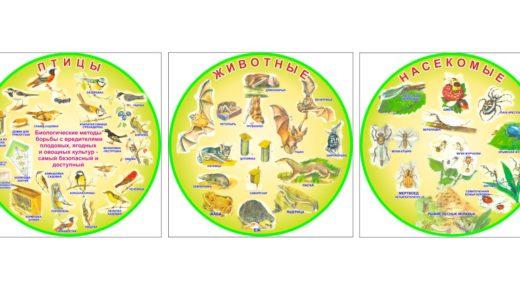 Плакаты/стенд птицы, животные, насекомые [CDR]