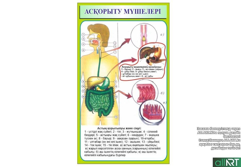 Стенд строение человека на казахском [CDR]