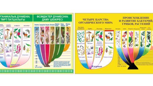 Стенд ортаникалық дүниенің төрт патшалығы, четыре царства органического мира, происхождение бактерий [CDR]