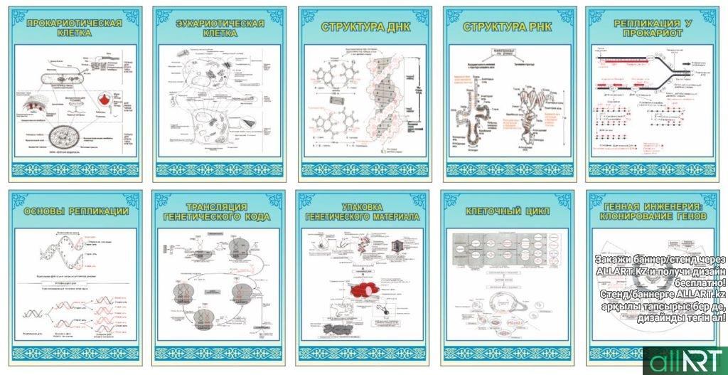 Стенд , плакаты строение клетки, атомы, рнк [CDR]